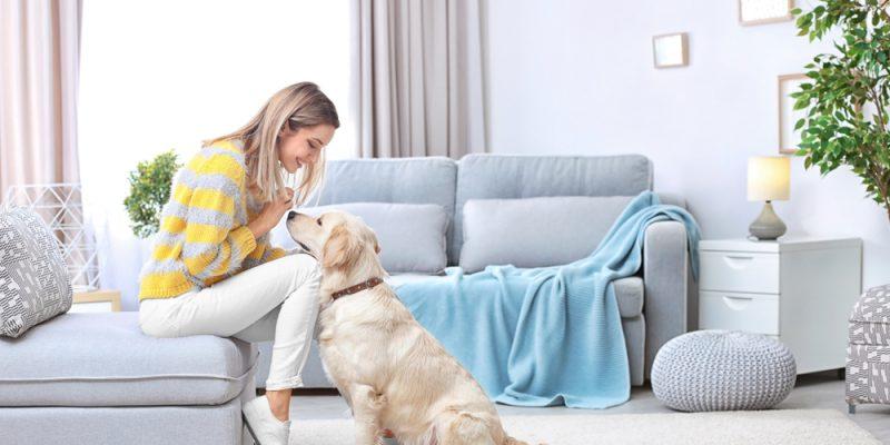 Practical Pet Remodeling Tips